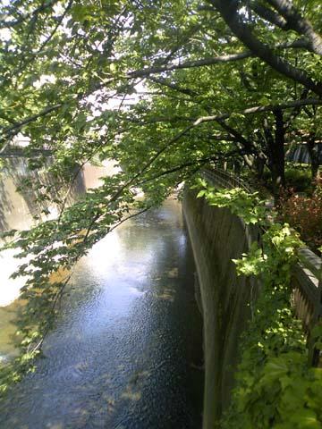 石神井川.jpg