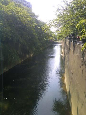 石神井川 (2).jpg