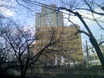 0323 桜と帝京病院.JPG