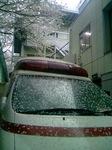 救急車と桜の花弁.JPG